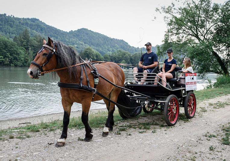 Prevozi s kočijo na poroko