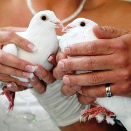 izpust belih golobov